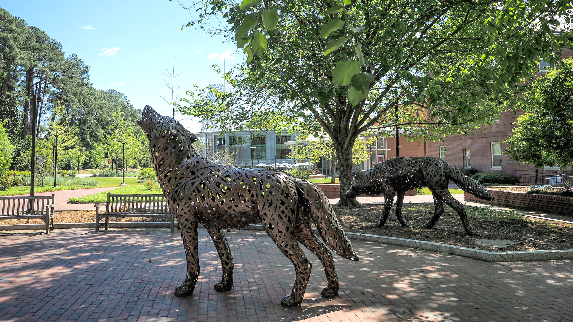 Two howling bronze wolves outside of Talley Student Union.